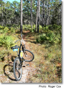 Bike trail through Poiint Washington State Forest, Florida Panhandle