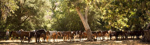 Alisal Guest Ranch, Solvang, California