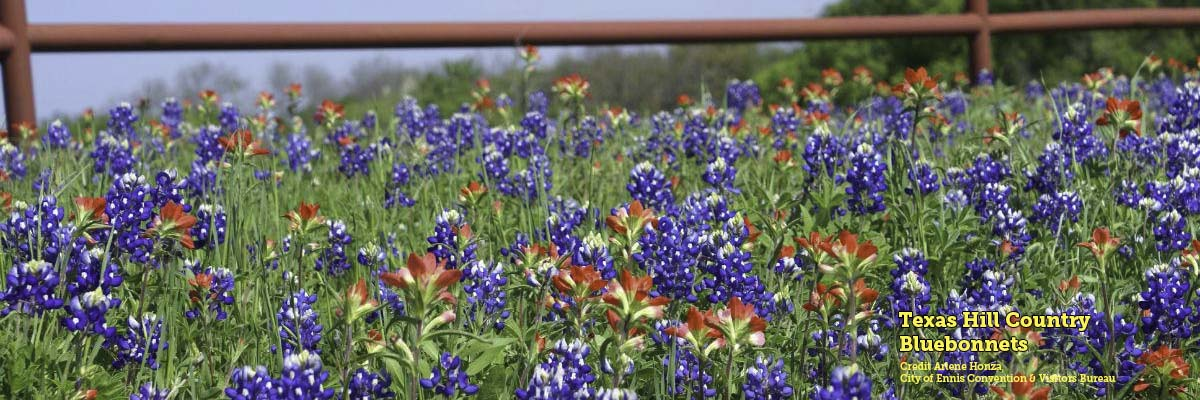 Bluebonnets, Texas Hill Country, credit Arlene Honza / City of Ennis Convention and Visitors Bureau