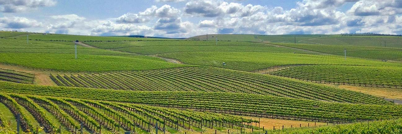 Walla Walla Washington Wine region